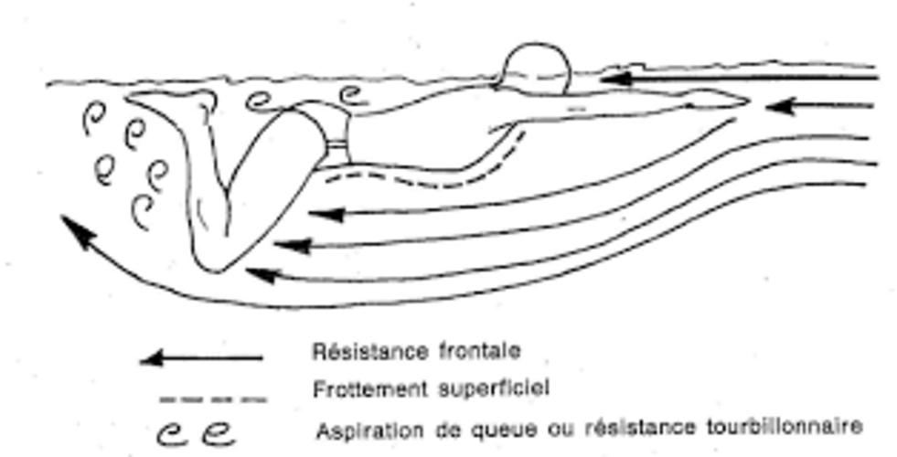 Questions L1 poly resistances